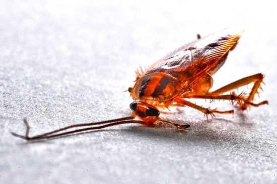 Заговоры помогают от тараканов