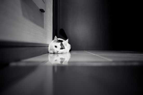 Кошка прибилась к дому