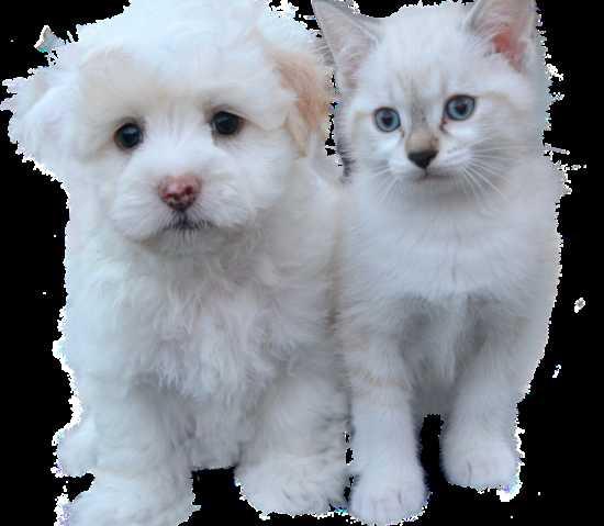 Существуют обряды и заговоры на продажу щенков и котят