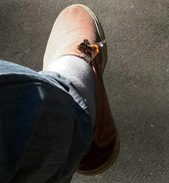 Бабочка села на ногу