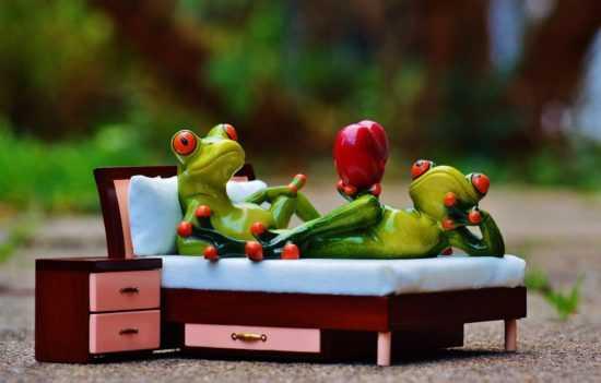 Лягушка на кровати