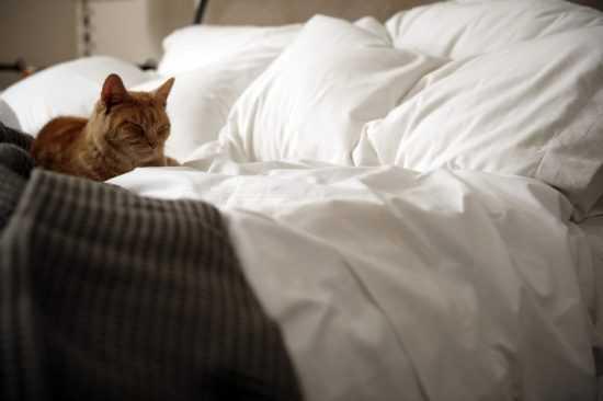 Кошка нагадила на кровать