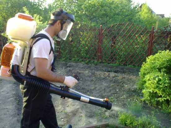 Борьба с вредителями огорода