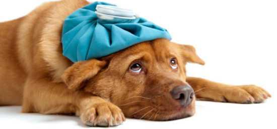 Заговор от болезни домашних животных