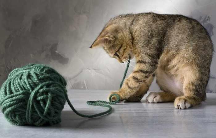 Кошка играет с клубком ниток